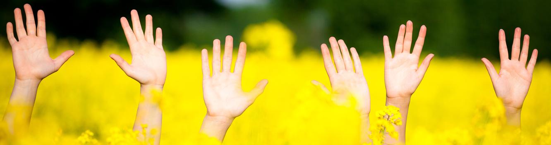Fünf aus einem Rapsfeld ragende Hände